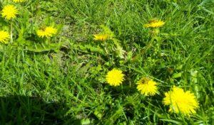 Mesilased lilledel