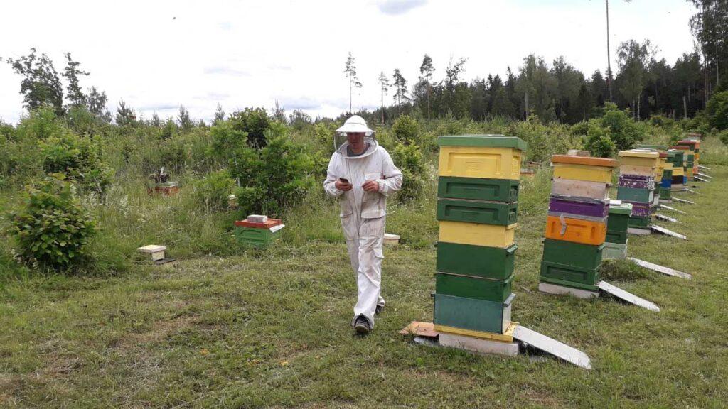 Mesilas toimetamas